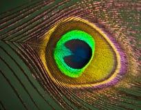 Ojo de la pluma del pavo real Imagen de archivo libre de regalías