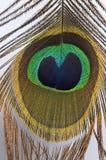 Ojo de la pluma del pavo real Imagen de archivo