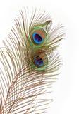 Ojo de la pluma del pavo real Fotos de archivo libres de regalías