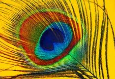 Ojo de la pluma del pavo real Fotografía de archivo libre de regalías