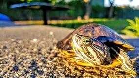 Ojo de la tortuga Foto de archivo libre de regalías