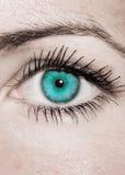Ojo de la turquesa - hermoso, femenino Imagen de archivo libre de regalías
