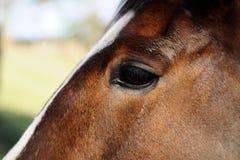 Ojo de los caballos Imagen de archivo libre de regalías