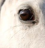 Ojo de los caballos Imagenes de archivo
