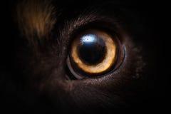 Ojo de los perros fotografía de archivo
