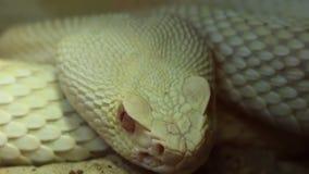 Ojo de serpiente almacen de metraje de vídeo