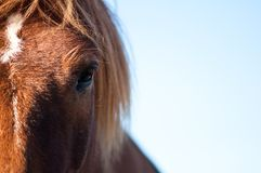 Ojo de un caballo Foto de archivo libre de regalías