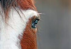 Ojo de un caballo Fotografía de archivo