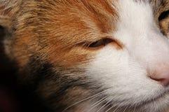 Ojo de un gato coloreado tres Imagenes de archivo