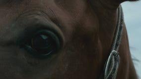 Ojo de un primer del caballo almacen de metraje de vídeo