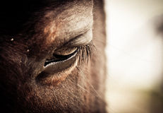 Ojo del caballo Imagenes de archivo