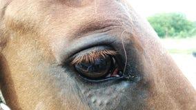 Ojo del caballo Imagen de archivo libre de regalías