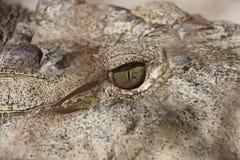 Ojo del cocodrilo Fotos de archivo libres de regalías