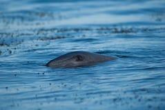 Ojo del delfín imagen de archivo