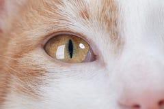 Ojo del gatito rojo Fotografía de archivo