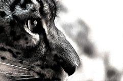 Ojo del gato Fotografía de archivo libre de regalías