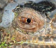 Ojo del lagarto Foto de archivo libre de regalías
