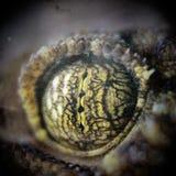 Ojo del lagarto fotos de archivo