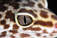 Ojo del lagarto Fotografía de archivo libre de regalías
