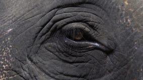 Ojo del maximus del elephas del elefante asiático Ciérrese encima de la visión metrajes