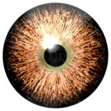 Ojo del pájaro El ojo animal con púrpura coloreó el iris, opinión del detalle en bulbo del ojo stock de ilustración