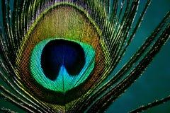 Ojo del pavo real - detalle Foto de archivo