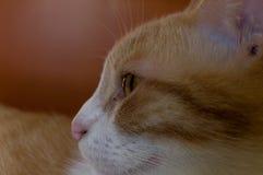 Ojo del perfil de los gatos imagenes de archivo