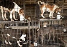 Ojo del perro sin hogar fotos de archivo
