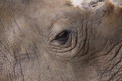 Ojo del rinoceronte Fotos de archivo
