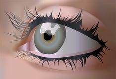 Ojo del vector Imagen de archivo libre de regalías