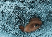 Ojo en hielo Fotografía de archivo