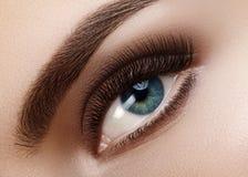Ojo femenino hermoso macro del primer con las cejas perfectas de la forma La piel limpia, forma maquillaje ahumado natural Buen V fotos de archivo