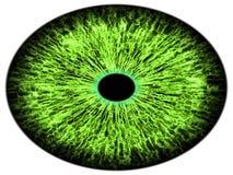 Ojo grande con el iris verde púrpura azul en el movimiento Visión detallada en bulbo del ojo Movimiento del alumno Muy de alta re stock de ilustración