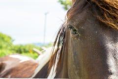 Ojo hermoso del caballo Imagenes de archivo