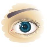 Ojo humano realista Imagen de archivo