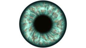 Ojo humano verde que dilata y que contrata Primer extremo muy detallado del iris y del alumno almacen de metraje de vídeo