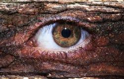Ojo marrón de madera Fotos de archivo