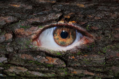Ojo marrón de madera con el musgo Fotos de archivo