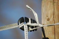 Ojo morado con la cinta blanca Foto de archivo