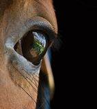 Ojo pensativo de un caballo. Foto de archivo libre de regalías