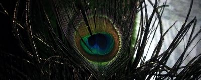 Ojo/pluma de un pavo real fotos de archivo libres de regalías