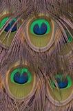 Ojo-punto de las plumas de cola del pavo real Foto de archivo libre de regalías