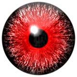 Ojo rojo de la textura imagen de archivo libre de regalías