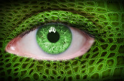 Ojo verde Imagenes de archivo
