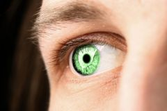 Ojo verde fotografía de archivo libre de regalías