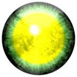 Ojo verde con el alumno abierto y la retina amarilla brillante en fondo Iris colorido oscuro alrededor del alumno, ojo aislado Fotos de archivo