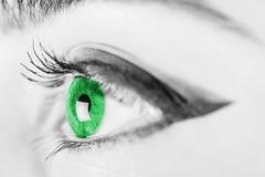 Ojo verde de la mujer blanco y negro Imagenes de archivo
