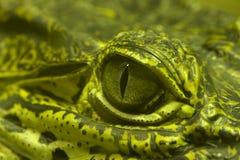Ojo verde de un cocodrilo verde Fotos de archivo libres de regalías