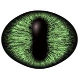 Ojo verde extraño del animal felino con el iris coloreado Detalle la opinión en bulbo despredador aislado del ojo stock de ilustración