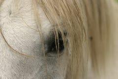 Ojo y melena del caballo Fotografía de archivo
